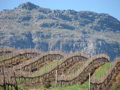 Winter seems like a dead and lifeless period in a vine's year. In truth, the temperatures and rainfall of this season, as well as the vineyard practices carried out during this time, play crucial roles in determining the quality and quantity of the next vintage.