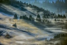 Hypnotizing Forests Of Slovenia, My Homeland   Bored Panda