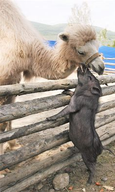 Funny animal pictures with 21 more pics like wren doing the splits. Some funny animal pictures with captions. Cute Baby Animals, Animals And Pets, Funny Animals, Wild Animals, Leaf Animals, Couples Impairs, Beautiful Creatures, Animals Beautiful, Unlikely Animal Friends