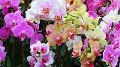 HD Hintergrundbilder orchideen bunt gelb weiß lila, desktop hintergrund