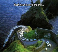 Rush hour in Ireland.