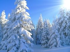 winter wonderland, schwarzwald , black forest