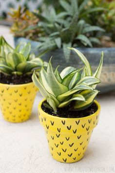 Add a pop of color and sweetness to your summer with these pineapple flower pots! Summer is right around the corner and it's time for some fun in the sun! This…