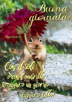 Italian Greetings, Good Morning Friends Quotes, Good Vibes, Happy Day, Animals, Birds, Phrases In Italian, Messages, Weather