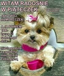 Good Morning, Teddy Bear, Dogs, Animals, Polish, Pictures, Buen Dia, Animales, Bonjour
