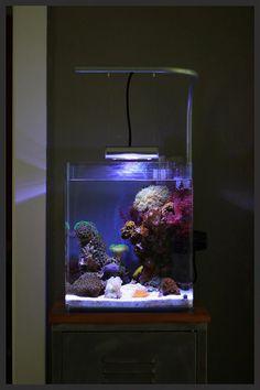 Aquarium Fish Tips Aquarium Terrarium, Aquarium Setup, Nature Aquarium, Aquarium Design, Saltwater Fish Tanks, Saltwater Aquarium, Aquarium Fish Tank, Marine Fish Tanks, Marine Tank