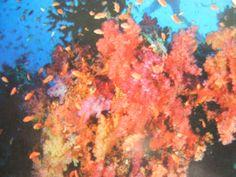 One of the top ten resort snorkel reefs in the world Top Ten, Snorkeling, World, Blog, Painting, Diving, Painting Art, The World, Paintings