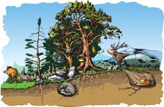 Illustration about Vector illustration of some forest animals habitat. Illustration of biology, circle, ecosystem - 69425506 Moby Max, Animal Habitats, Forest Animals, Biology, Illustration, Cute, Painting, Woodland Creatures, Kawaii