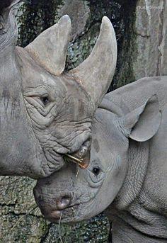 Sweet Kendi and his perfectly protective Mom, Seyia.