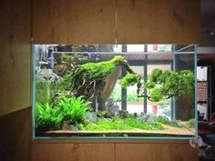 Pin By Grace Law On Aquarium Design In 2020 Aquarium Fish Tank Aquarium Aquarium Fish