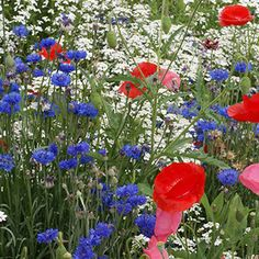 25 Shade Wildflower Mix