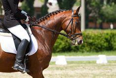 Imágenes Equitación Horse Boots Botas Riding Mejores 16 De 5wqxvaICO