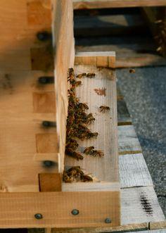 L'apiculture urbaine au CRAPAUD