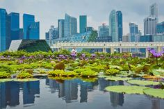 Singapore is reviewing the rules for venture capital firms as it attempts to…