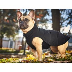 The 5-Second Dog Parka
