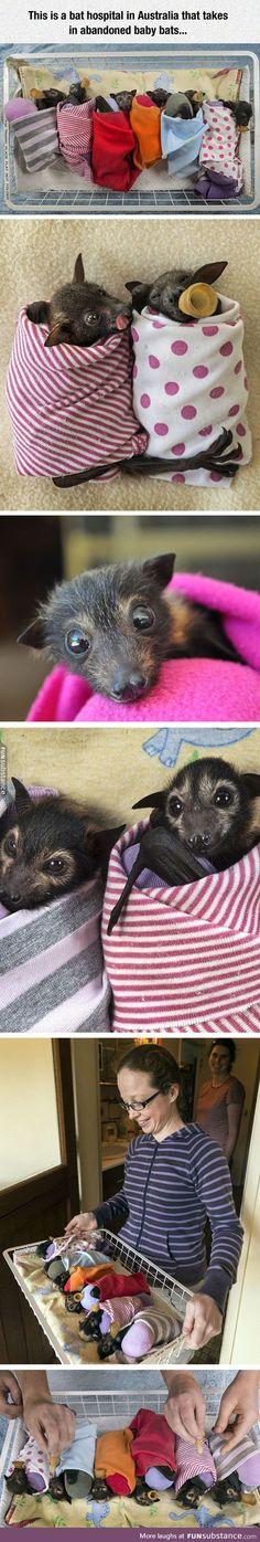 Hospital for bats