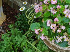 gardenchair1