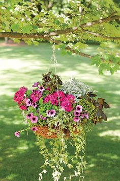 """Try varying the scale of flowers and greenery to produce the wildly untamed, """"growing in a garden"""" feel that keeps this basket relaxed. In this sphagnum moss-lined metal hanging basket, larger dianthus blend with smaller petunias, while variegated English ivy and tiny baby's tears dangle over the sides."""