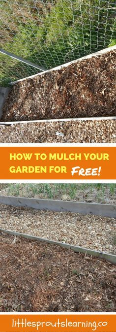 5 Humane Ways To Get Rid Of Squirrels In Your Garden Squirrel Gardens And Garden Projects
