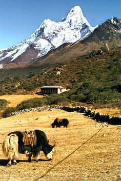 Ama Dablam metres) viewed from the small Himalayan village of Tengboche m) in the (Khumjung) Khumbu region of northeastern Nepal. Tengboche has a renowned gompa (monastery). Tibet, Dalai Lama, Nepal Trekking, Himalaya, Historical Sites, Places To Go, National Parks, Scenery, Around The Worlds