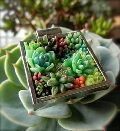 Succulent Garden Pendant. Sculpted to capture the radial balance and beauty of desert 'flowers', it becomes a wearable personal garden, never far from your heart.    This one of a kind pendant was hand-sculpted in the foggy coastal forests of Oregon. It features tiny yet botanically accurate Aeonium, Aloe, Conophytum, Echeveria, and Sedum.