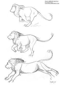 Drawing Animals in the Zoo - Drawing On Demand Pencil Drawings Of Animals, Animal Sketches, Art Drawings Sketches, Drawing Animals, Simple Animal Drawings, Zoo Drawing, Drawing Poses, Drawing Tips, Eagle Drawing