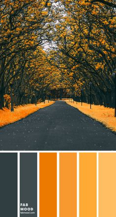 Color Inspiration : Charcoal and Yellow Mustard 1 - Fab Mood Scheme Color, Color Schemes Colour Palettes, Colour Pallette, Color Palate, Color Combos, Summer Colour Palette, Orange Color Schemes, Summer Wedding Colors, Fall Wedding