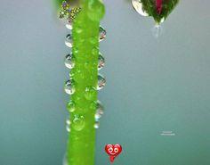 #raindrops #nature #rain #macro #rainyday #photography #naturephotography #flowers #photooftheday #raindrop #rainy #macrophotography #love #ig #rainydays #drops #raining #water #perfection #photo #flower #naturelovers #green #picoftheday #mobilephotography #beautiful #waterdrops #regentropfen #of #bhfyp<br> Water Photography, Mobile Photography, Water Drops, Rain Drops, Rainy Days, Drop Earrings, Green, Nature, Flowers
