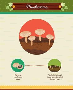 Hot to grow mushrooms from scraps