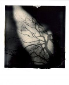 Love this polaroid photo by Laura Su Bischoff- found on the Impossible Project website
