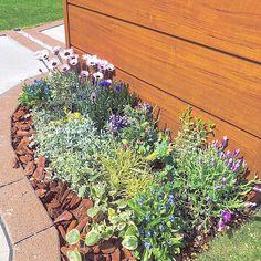 Garden Beds, Plants, Houses, Flora, Plant
