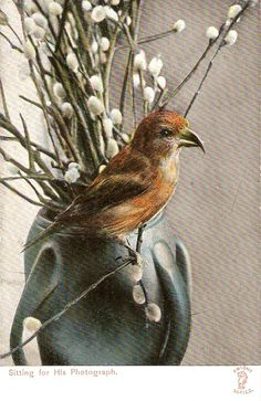Bird Sitting for his Photograph Lovely by sharonfostervintage, $2.50