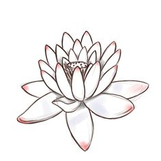 How to Draw a Lotus Flower - Step by step drawing instructions that could inspire a watercolor painting.