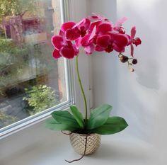 Орхидея нравится многим цветоводам, которые вовсе не против украсить собственный дом этим прекрасным растением. Однако украшением цветок станет только, если заставить его повторно зацвести – а это уже задачка непростая, требующая соблюдения целого ряда условий, присутствия определенных внешних факторов и обеспечения надлежащего ухода. В противном случае цветения не будет, и мечта о красивой орхидее в […]
