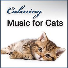 Calming Music For Cats: Gentle Songs To Relax And Calm Down Your Pet Cat by Soothing Music & Nature Sounds For Kittens Playing, Relaxing, Sleeping in the Microsoft Store