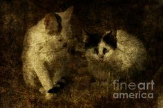 Two Kittens   From the series Straycats Photography and fine art by alice van der sluis. #AlicevanderSluis #Art #Photography  #Cats  www.alice-art.nl www.alicevandersluisart.blogspot.com www.facebook.com/alicevandersluisart Copyright Alice van der Sluis