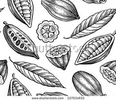 http://thumb7.shutterstock.com/display_pic_with_logo/108586/227034655/stock-vector-engraved-pattern-of-leaves-and-fruits-of-cocoa-beans-227034655.jpg