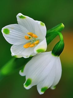 ~~a couple of snowdrops by Tortie_cat~~
