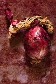 cipolla onion still life