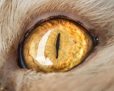 Artist captures images of cats eyes ingeniously