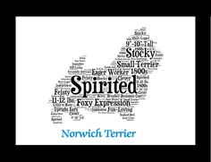 Traits of the Norwich Terrier The Norwich Terrier shares an identical early history with the Norfolk Terrier. Around 1900 a dog named Rags came to a stable near Norwich and gained fame as a ratter. He