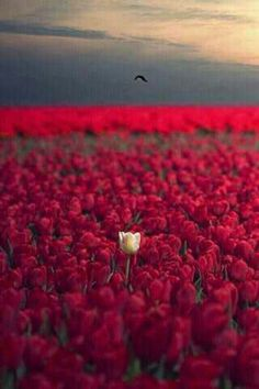 This is like me, seriously, I am the white flower and red flowers are others. I have always been different, that's why I was bullied in school. But today I'm still different, and proud of it. -Shinsu