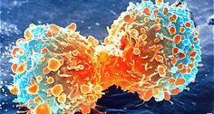 Le chlorure de magnésium anticancéreux