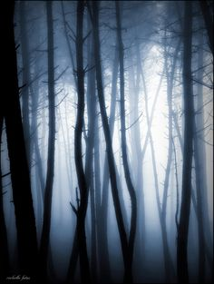 500px / Photo Blue forest by Guillermo Carballa