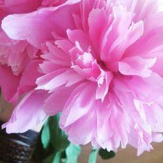 #smellingflowersistherapeutic #life #beauty #orgalabel  http://orgalabel.ro/