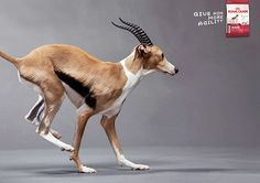 Royal Canin : Give him more on Behance