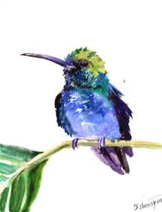 Blue Green Hummingbird, original watercolor painting, 10 X 8 in, tropical bird art, vertical orientation