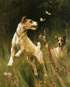 Fox terrier and butterfly