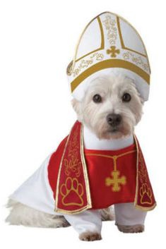 Make your pup look like a pope this Halloween with the Holy Hound Dog Costume . The Holy Hound Costume provides traditional vestments for your dog and makes for a fun costume for your pooch. Best Dog Costumes, Pet Halloween Costumes, Funny Costumes, Pet Costumes, Dog Halloween, Costume Ideas, Animal Costumes, Halloween Season, Spirit Halloween