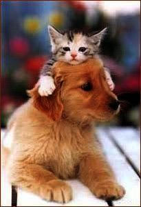 Cats And Kittens Peter Erskine Cats And Kittens Perth Cute Cats And Dogs Kittens And Puppies Animals Friends